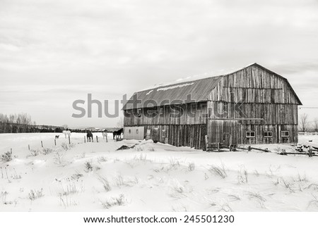 Snow scene with old barn, horses and goat, in the area of Beauce, Quebec province, Canada. Black and white. - stock photo
