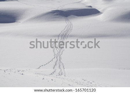 Snow shoe tracks in the snow at Grimsel Pass (2165 m), Wallis, Switzerland. - stock photo