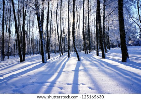 Snow sparkling in the morning sun - stock photo