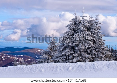 Snow Spruce in Kopaonik, serbian ski resort
