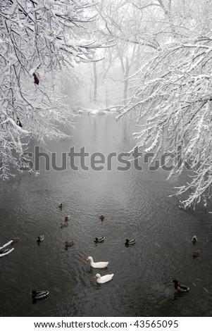 Snow storm,Winter scene. - stock photo