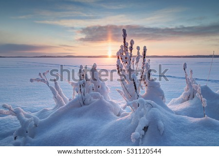 Snowbank, snowy plants and sunrise at a frozen and snowy lake in Finland in the winter.