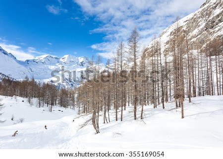 Snowboarders skiing in a snowy mountain forest. Gressoney, Val d'Aosta, Italy, West italian Alps,Europe. - stock photo