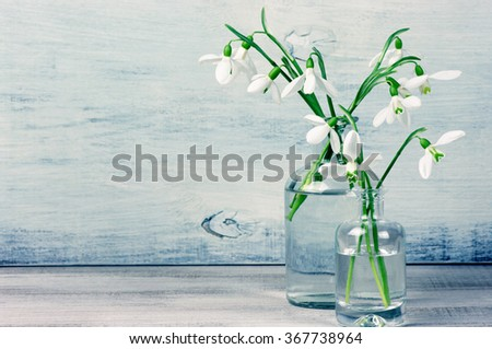 Snowdrops in glass vases on wooden table against shabby wooden wall. Filtered cool toned image. - stock photo