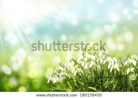 Snowdrops in spring - stock photo