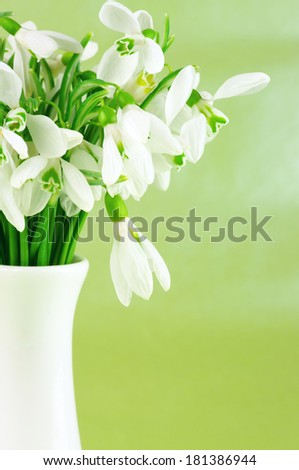 Snowdrops in white vases on green background. Shallow DOF. - stock photo