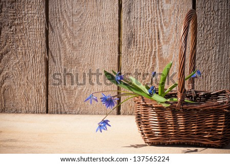 snowdrops on wooden background - stock photo