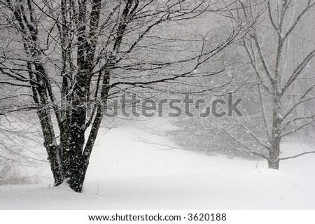 Snowfall - stock photo