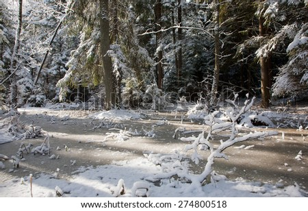 Snowfall after wetland stand in morning with snow wrapped trees and frozen water around, Bialowieza forest,Poland,Europe - stock photo