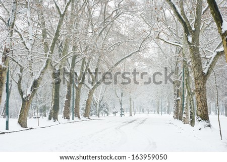 snowfall in a park - stock photo