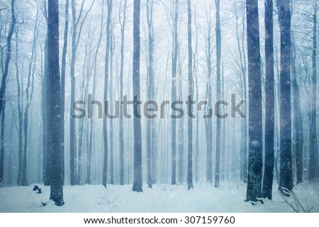 Snowfall in foggy beech forest landscape. Snowy woodland background. - stock photo