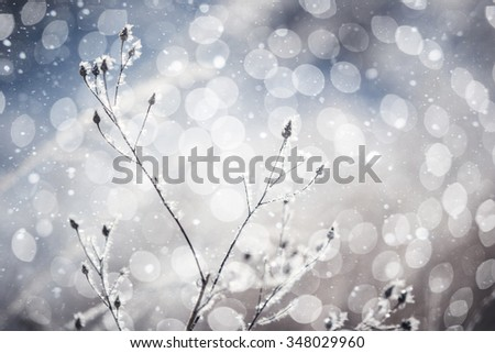 Snowfall in the field. Bush Grass covered with ice crystals. The snow glistens on the blade of grass. Close-up. Winter background. Copy space. - stock photo