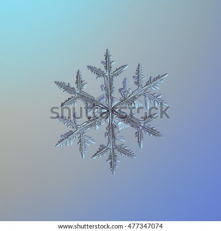 Snowflake on bright gray-blue gradient background. This is macro photo of real snow crystal: medium size stellar dendrite with complex structure and lots of details.