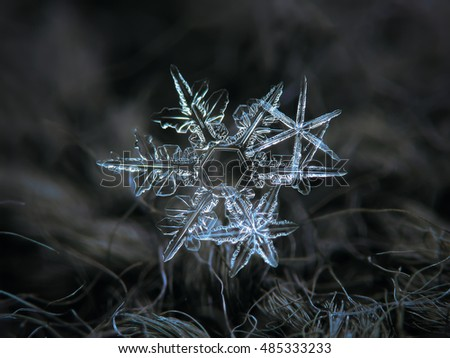 Snowflakes glowing on dark wool background. This is macro photo photo of real snow crystals: three stellar dendrites with pointy arms and sharp edges in a cluster.