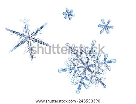 Snowflakes natural, set of isolated flakes on white background - stock photo