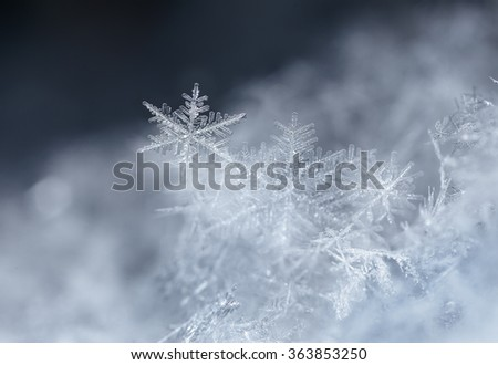 snowflakes on snow. the picture is made at a temperature of-8 C photo real snowflakes during a snowfall, under natural conditions at low temperature - stock photo