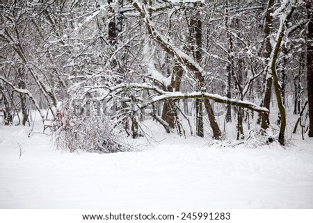 Snowing landscape in the park