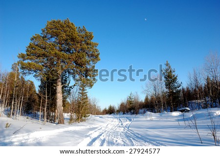 snowmobiletrack and trees - stock photo