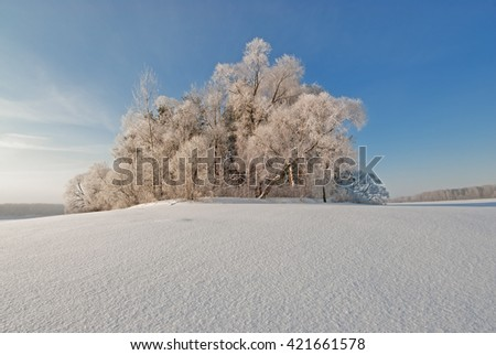 Snowpack and the trees in the snow - stock photo