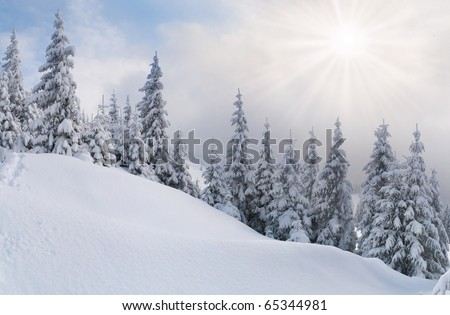 snowstorm in the Carpathian mountains - stock photo