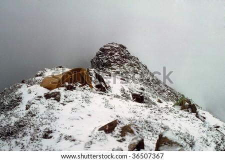 Snowstorm traps hikers in their tent on a mountain ridge,North CascadesWashington - stock photo