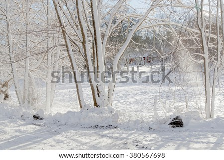 Snowy alley of trees a sunny winter day. Meadow in the background. - stock photo