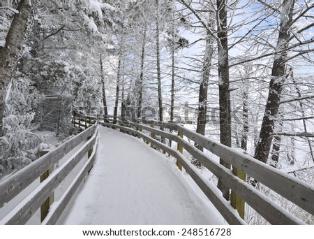 Snowy Boardwalk  through a forest in Mammoth Hot Springs, Yellowstone National Park - stock photo