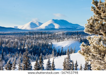 Snowy boreal forest taiga winter wilderness landscape of Yukon Territory, Canada, north of Whitehorse - stock photo