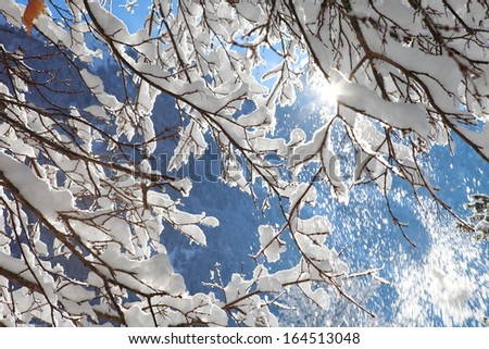snowy branches on the background of the sky - stock photo