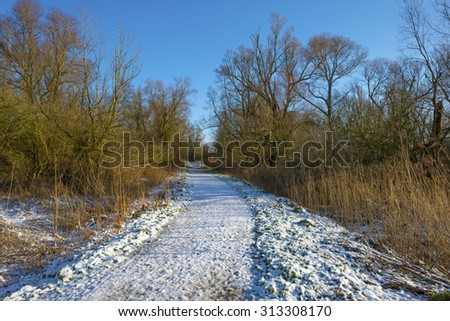 Snowy footpath through a forest in winter - stock photo