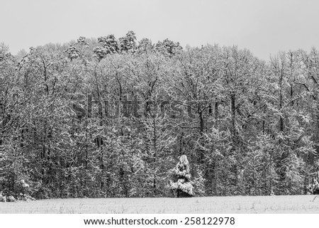 Snowy Forest. - stock photo