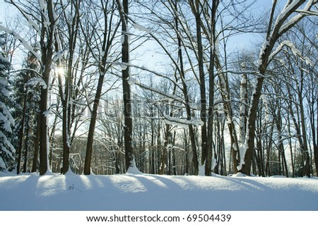 snowy forest - stock photo