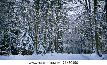 Snowy forest after whiteout in winter