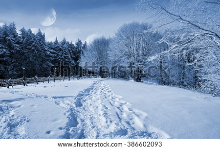 Snowy forest at moonlight in winter in Italy