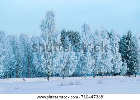 Snowy forest at the countryside, winter Rovaniemi, Lapland, Finland.