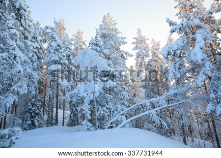 Snowy forest at winter and clear sky - stock photo