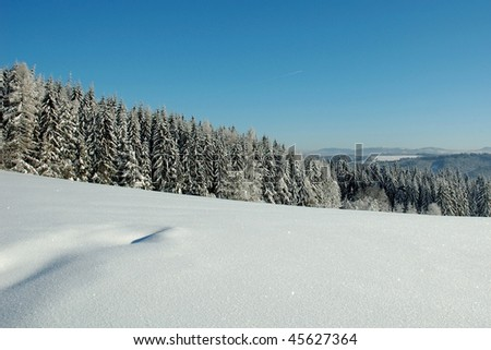 snowy forest in czech republic with blue sky