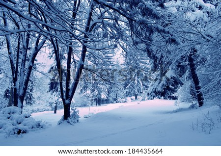 snowy forest thicket - stock photo