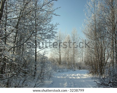 Snowy ground road among frosted trees, sunny winter day