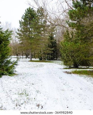 snowy land - snow covered footpath in the forest at winter - stock photo