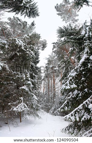 snowy landscape in the forest - stock photo