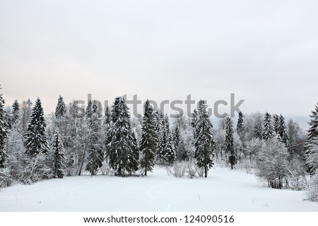 snowy landscape in the forest