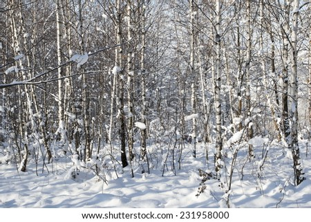 Snowy landscape with birch trees - stock photo
