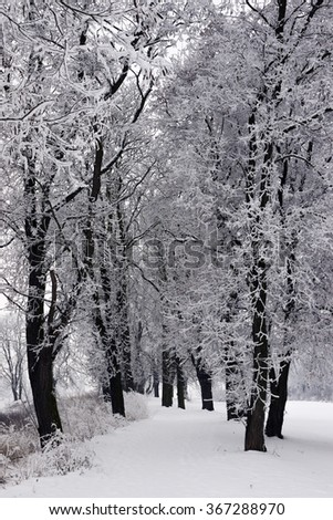snowy landscape with trees in winter