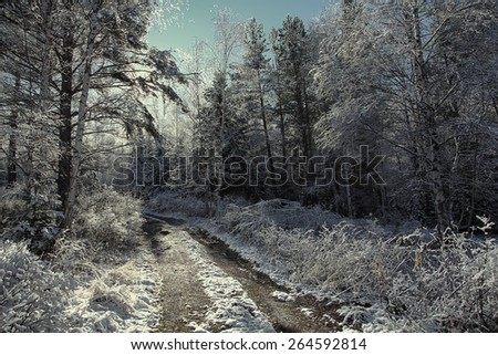 snowy morning in the Altai Mountains - stock photo