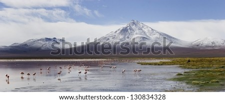 Snowy mountain and flamingos in the beautiful pink-colored Lagoon Colorada in the Reserva Nacional de Fauna Andina Eduardo Avaroa in southwestern Bolivia