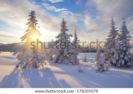 Snowy mountain forest. Winter landscape a sunny day. Carpathians, Ukraine, Europe - stock photo