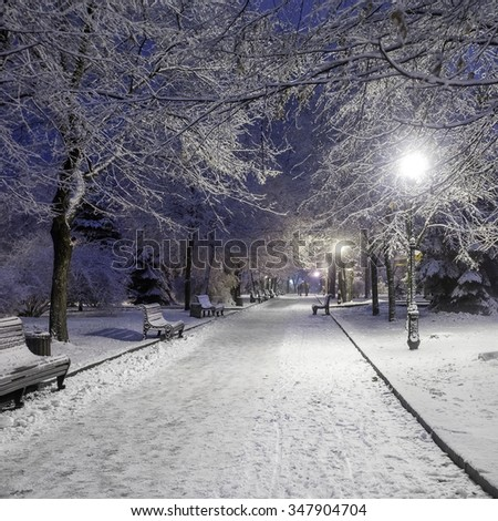 Snowy night alley in the park in winter with a lot of frosty trees and shining lanterns - winter city landscape  - stock photo