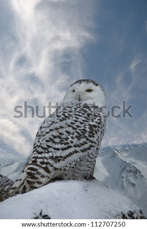 Snowy on background blue sky - stock photo