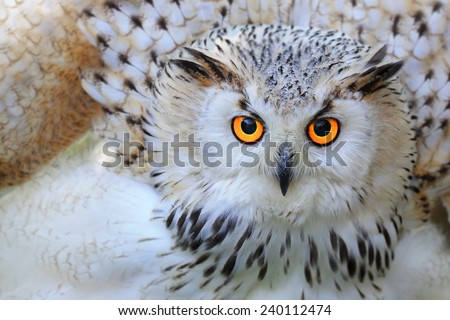 Snowy owl - stock photo